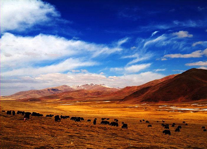 西藏昌都-邦达草原,西藏,昌都