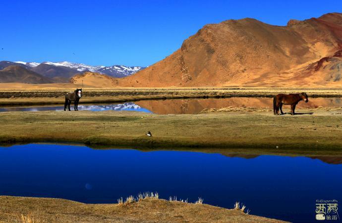 西藏阿里-阿里帕羊草原,西藏,阿里