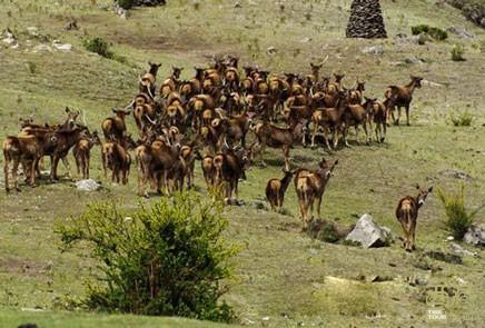 西藏山南-桑日马鹿自然保护区,西藏,桑日