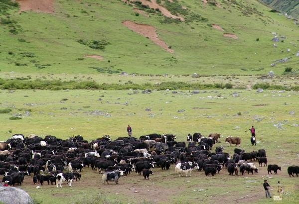 西藏林芝-竹瓦根镇日东牧场,牧场,村民委员会,西藏,东南,中心
