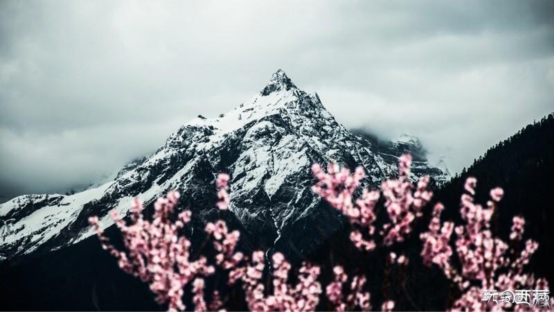 中国最美山峰-南迦巴瓦峰下的桃花,雅鲁藏布江,南迦巴瓦峰,中国,西藏