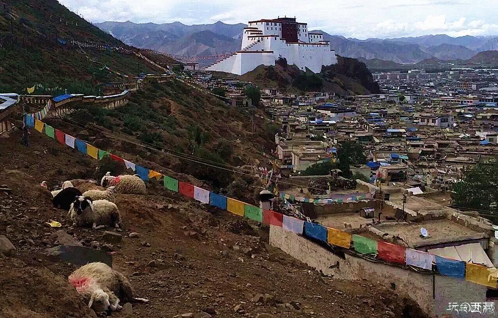 【西藏美图】夏季西藏,与夏同行,户外攻略,西藏美图,西藏故事,西藏百科,西藏攻略