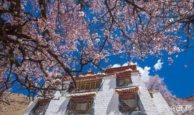 【西藏美图】拉萨桃花 PK 林芝桃花,你觉得谁更美?,西藏攻略,西藏百科,西藏故事,户外攻略,西藏美图