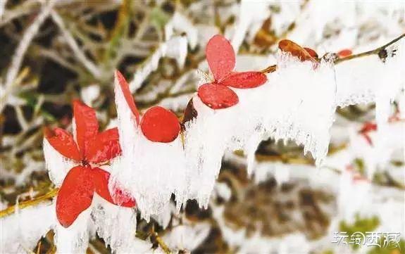 重�c下雪了!