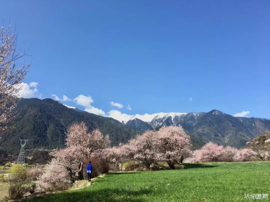 好趁春晴连夜赏,桃花与春休
