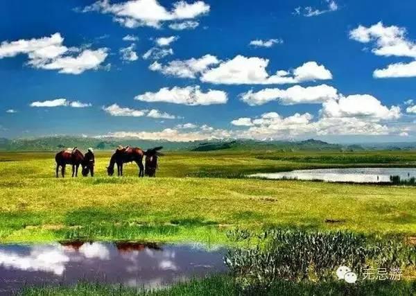 你知道新疆美景有喀纳斯秋色,还知道有草原花海吗?